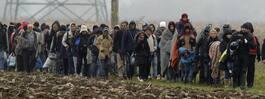 Österrike placerar militär vid gränsen – ska stoppa flyktingar