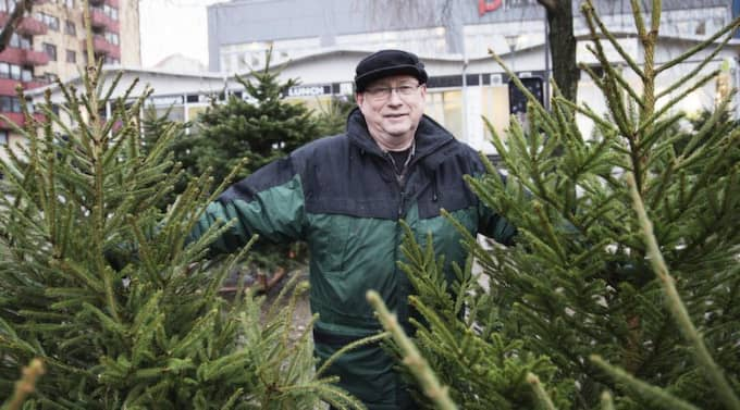 PRIMA VIRKE! Julgransförsäljare Bengt Karlsson, 62, hittar du på Masthuggstorget i Göteborg. Granarna han frestar med är från Danmark, Skåne och Jörlanda. Foto: Anders Ylander