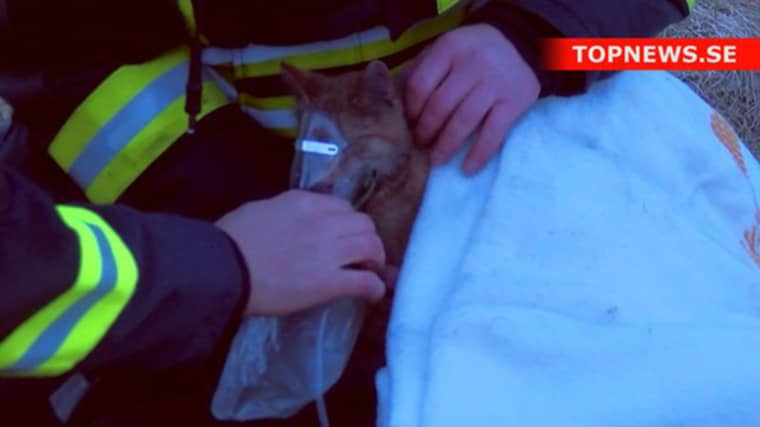 Katten var svårt medtagen efter att ha fått i sig rök. Foto: topnews