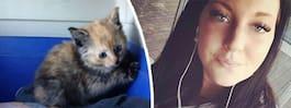 Kattungarna slängdes ut ur bil – på motorväg