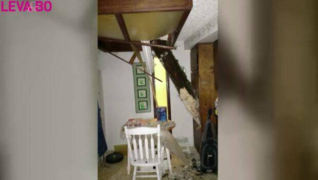 Walt tittade på TV i källaren när trädet kraschade in i köket