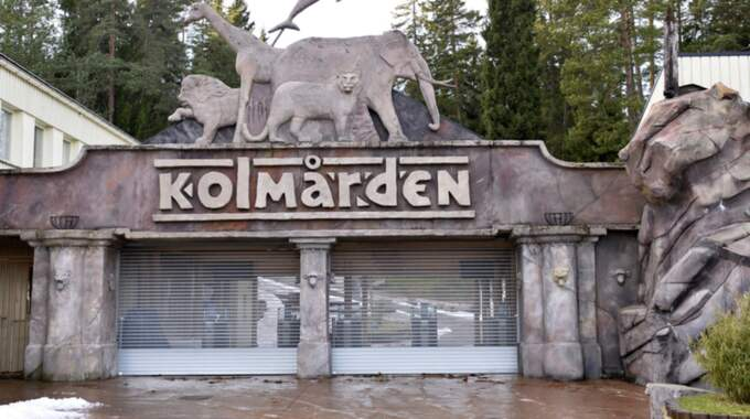 Norska vargexperten Runar Næss är starkt kritisk till den dominerande arbetsmetod som användes mot vargarna på Kolmårdens djurpark. Foto: Anders Wiklund/TT