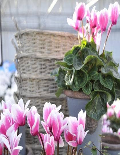 BILDSPECIAL Härär växterna som trotsar kylan Leva& bo