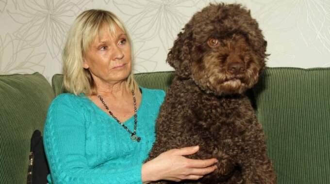 HUND MED SERVICEANDA. Elvis är förutom diabeteshund också en servicehund som hjälper Marie Hansson med att plocka upp saker och att ta av jackan. Foto: NIKLAS HENRIKCZON
