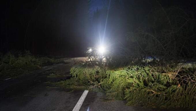 Stormfälld skog på riksväg 50 strax norr om Motala. Foto: Jessica Yngve / Tt