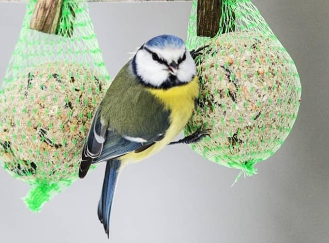 Ny svensk forskning visar att snabb syn är typiskt för fåglar. Foto: Nils Petter Nilsson