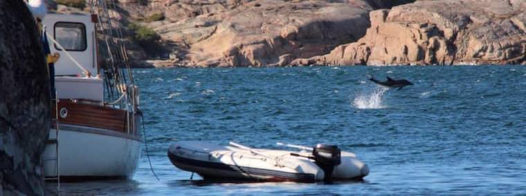 Enligt sportfiskaren Torbjörn Sandin samlades båtarna kring de delfinerna utanför Fjällbacka. Foto: Läsarbild