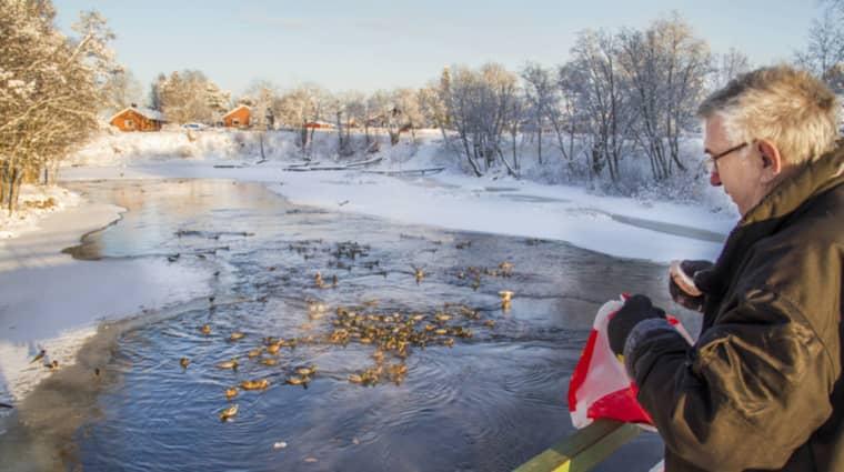 Kjell-Ove Björk packar bilen med ungefär fyra påsar med gammalt bröd och kör till Skutskär. Foto: Anton Emanuelsson/Arbetarbladet