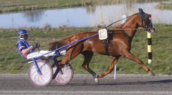 Alfas da Vinci möter On Track Piraten i V75-7 i Jägersros jackpottomgång. Foto: Micke Gustafsson/Foto-Mike/Kanal 75