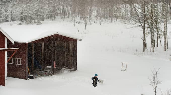 På flera håll väntas uppåt en decimeter snö. Foto: Nils Jakobsson / BILDBYRÅN