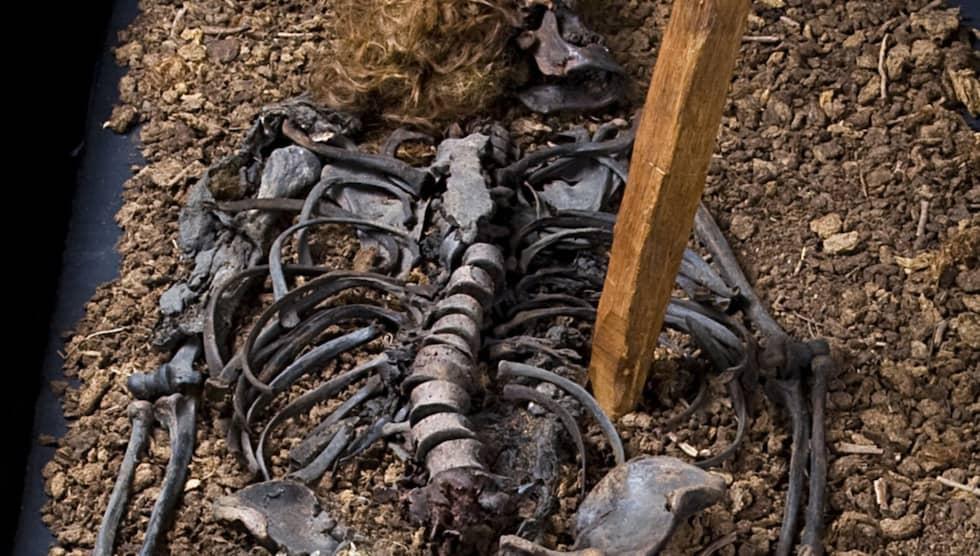 Bockstensmannen hittades död med tre pålar i kroppen. Den största var av ek och satt rakt genom hjärtat. Foto: / CHARLOTTA SANDELIN