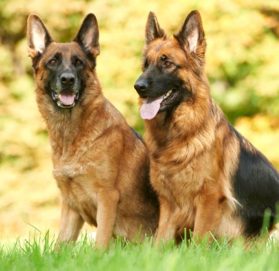 hundstallet