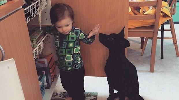 Hjältehunden räddade ettåriga Silas