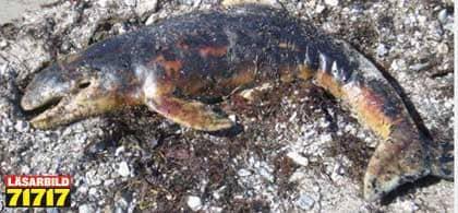 Dod tumlare flot i land utanfor trelleborg