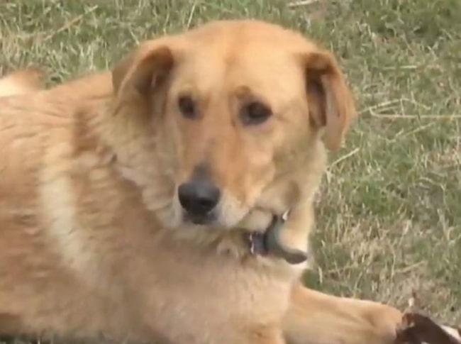 Hunden skyddade pojken och höll honom vart och torr.