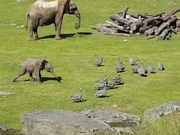 Elefantbebisen gör succé världen över
