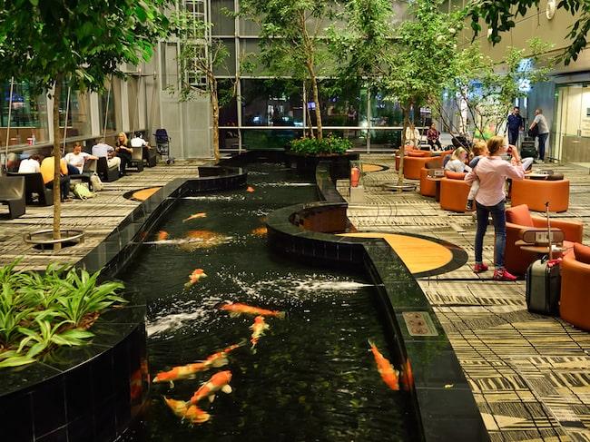 Singapore Changi Airport vinner regelbundet omröstningar om världens bästa flygplats.