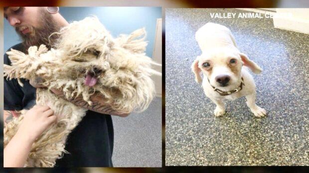 Hundens nya utseende - efter veterinärens räddning