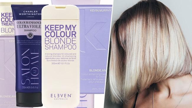 loreal silverschampo användning