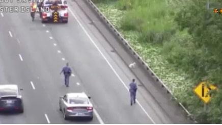 Liten hund lös – krävdes flera polismän i jakten