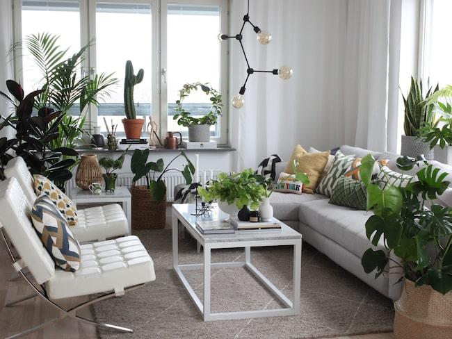 Grönt är skönt – här har du bästa tipsen för hur du inreder med gröna växter.