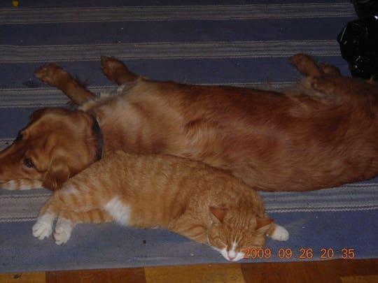 Katten vilken hundmor