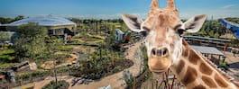 Redo för ett äventyr? Ta jobbet som giraffskötare