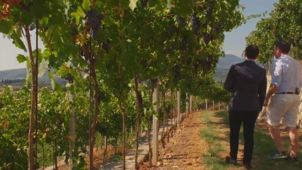 """Vin & Mat – Passioner: """"Det goda vinet blir till på fälten innan det produceras"""""""