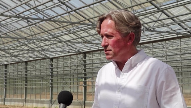 """Bygger ett imperium för cannabis: """"Ska exportera upp till 95 procent"""""""