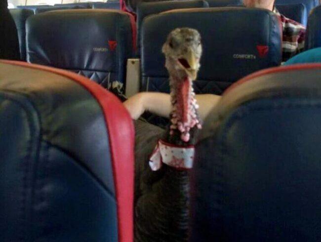 En passagerade hade den här bakom sig under flygningen.