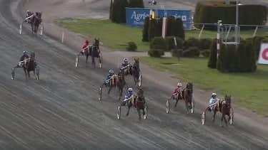 Stefan Melanders häst Fatimas Future ligger sist i loppet – sekunderna senare faller hästen ihop och dör. Foto: ATG Live