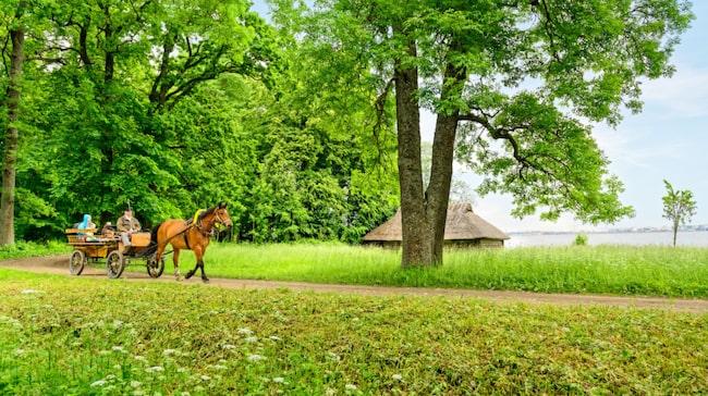 Varför inte ta en guidad tur med häst och vagn för att komma nära den estländska landsbygden.