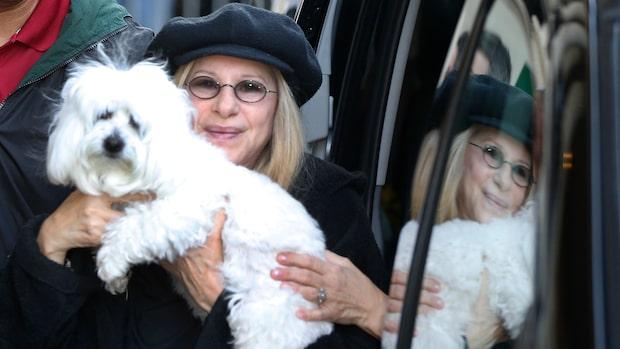 """Barbra Streisand avslöjar: """"Jag har klonat min hund"""