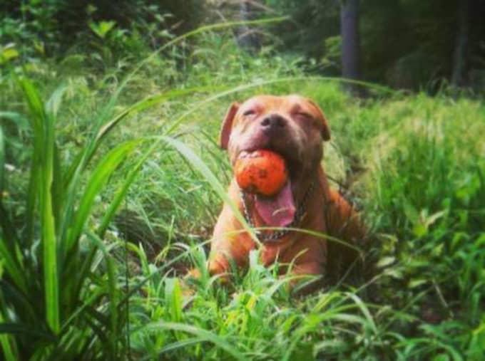 Cathy älskar att springa och hämta bollar.