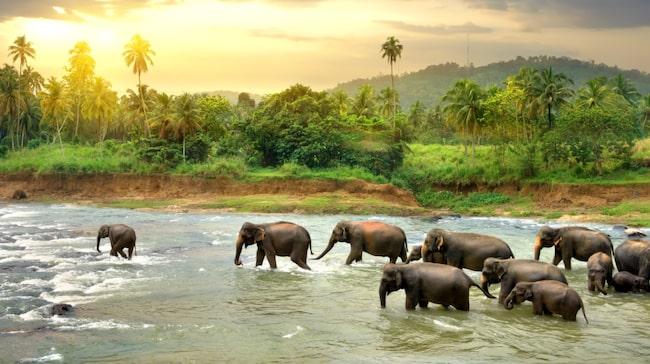 Sri Lanka har ett rikt natur- och djurliv.