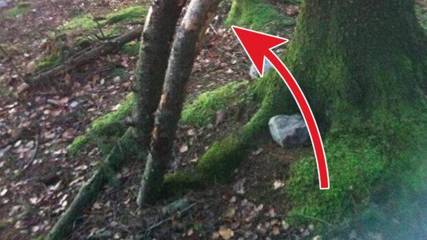 Ann-Britt gjorde obscena fyndet i skogen