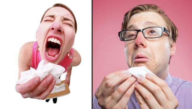 kliar i näsan och nyser