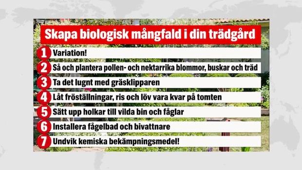 Experten: Så skapar du biologisk mångfald i din trädgård