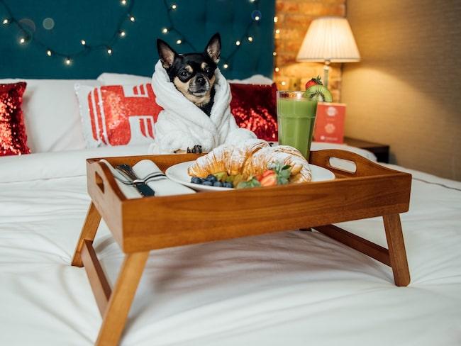 Bokningssajten Hotels.com söker en hund som vill bli testkanin.