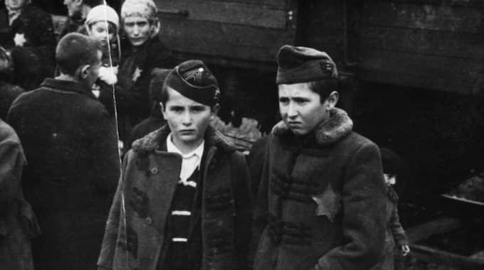 Barnen är Lili Jacobs bröder Sril och Zelig. Båda dödades kort efter ankomsten till Auschwitz. Foto: Judiska museet
