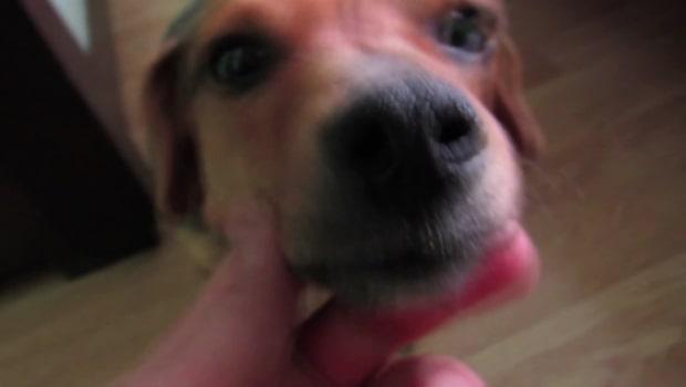 Hunden Berta övergiven mitt på motorvägen