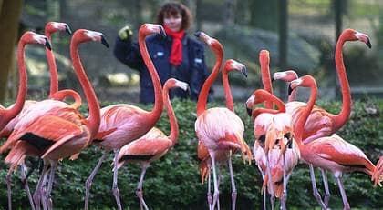 Flamingos, pelikaner och papegojor försvinner snart från Slottsskogen. Ett bra beslut. Att se på vilda djur i fångenskap är en förlegad tradition. Satsa hellre på ett modernt Barnens Zoo. Foto: Frank Hormann