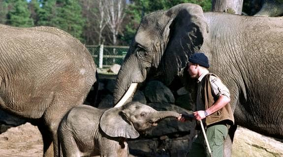 Shona och hennes unge Pili tvingades att avlivas. Nu kräver djurparken miljonersättning för de båda elefanterna. Detta är dock två andra elefanter på Borås djurpark. Foto: Tommy Holl