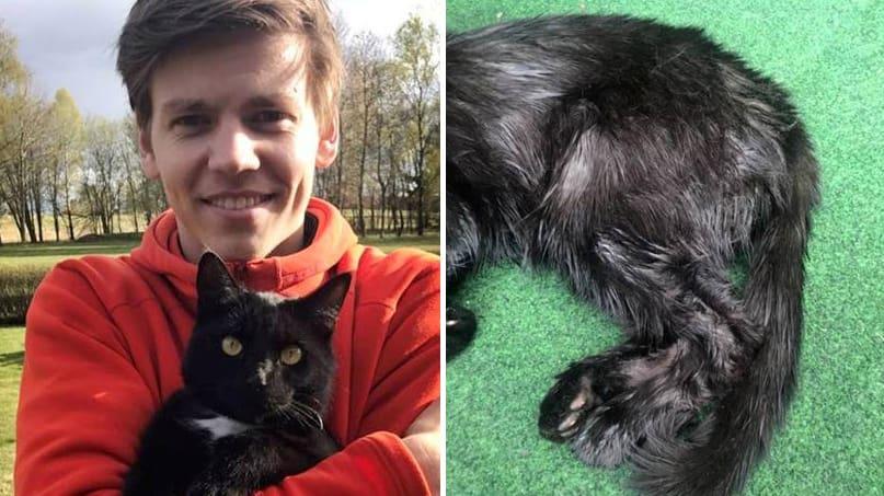 När katten Sune släpptes in av 24-åriga Daniel Sundbergs svärföräldrar