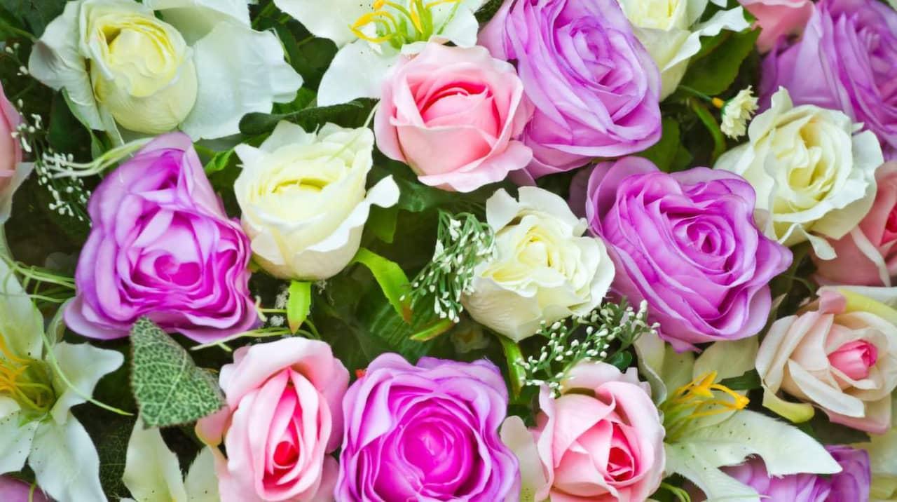 vad betyder rosa rosor