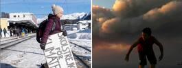 Ny studie: Större oro för  klimatet än för terrorism