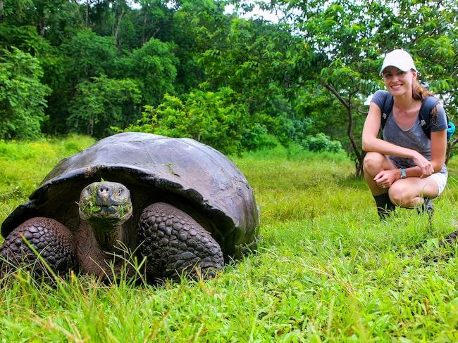På Santa Cruz, i Galapagos nationalpark, lever världens största sköldpaddor.