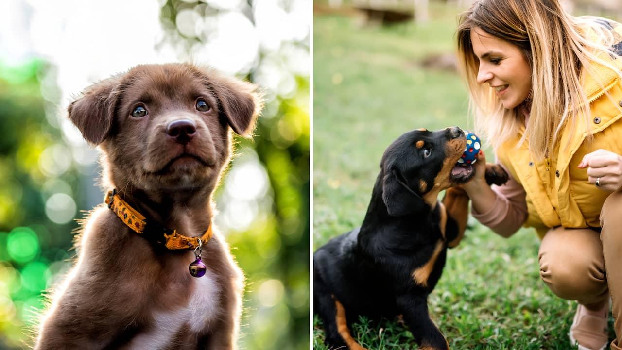 Kopa Hund Testa Vilken Hundras Som Passar Dig