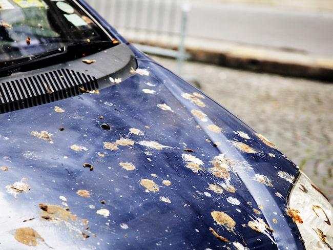 Susan Allans bil blev täckt av bajs, som kan ses på CBC News. Detta är en genrebild.