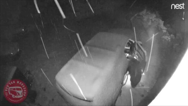 Hungrig björn öppnar tre bildörrar